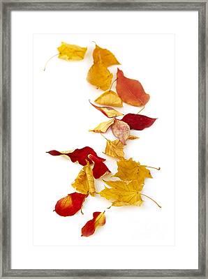 Autumn Leaves Framed Print by Elena Elisseeva