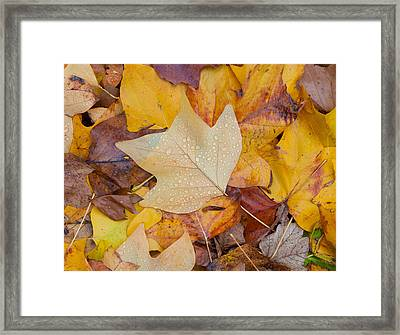 Autumn Leaves Framed Print by Hans Engbers