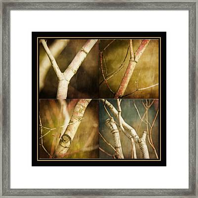 Branching Out Framed Print by Bonnie Bruno