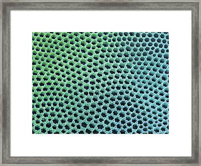 Diatom Cell Wall, Sem Framed Print by Steve Gschmeissner