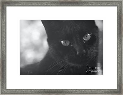 Dimensions Of A Heart Framed Print by Sharon Mau
