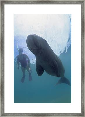 Dugong Framed Print by Louise Murray
