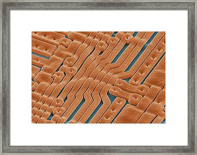 Eprom Silicon Chip, Sem Framed Print by Power And Syred