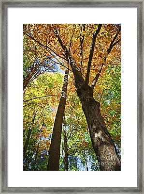 Fall Forest Framed Print by Elena Elisseeva