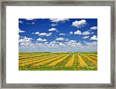Farm Field At Harvest In Saskatchewan Framed Print by Elena Elisseeva