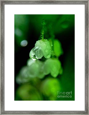 Flower And Drops Framed Print by Odon Czintos