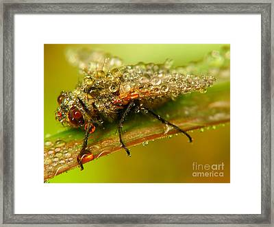 Fly Framed Print by Odon Czintos