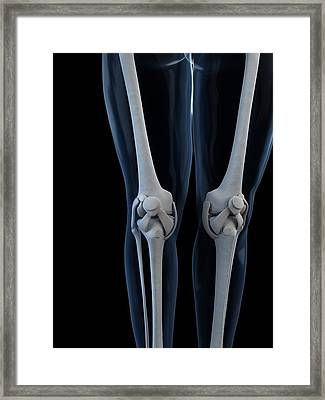 Knee Anatomy, Artwork Framed Print by Sciepro
