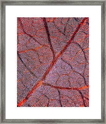 Leaf Anatomy, Light Micrograph Framed Print by Dr Keith Wheeler