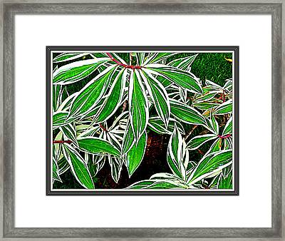 Leaves Framed Print by Anand Swaroop Manchiraju