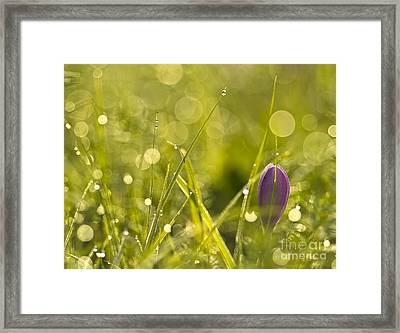 Light Flowers Framed Print by Odon Czintos