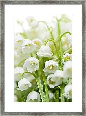 Lily-of-the-valley Flowers Framed Print by Elena Elisseeva