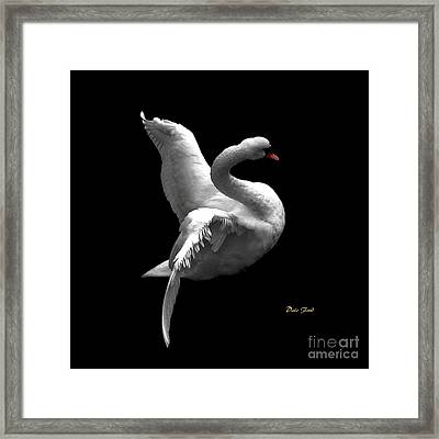 Majestic Swan 2 Framed Print by Dale   Ford
