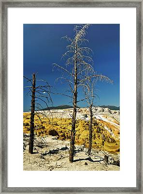 Mammoth Upper Terrace Framed Print by Greg Norrell