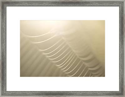 Part Of A Spider Web Shows Framed Print by Phil Schermeister