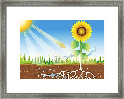 Photosynthesis, Artwork Framed Print by David Nicholls