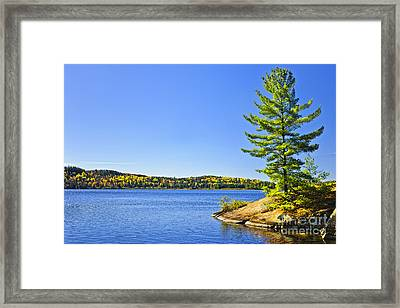 Pine Tree At Lake Shore Framed Print by Elena Elisseeva