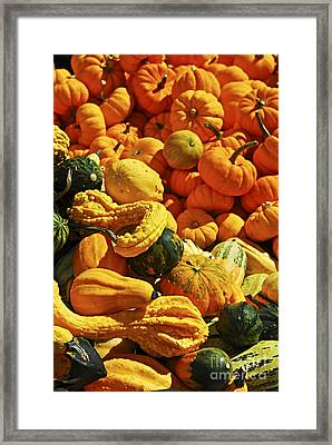 Pumpkins And Gourds Framed Print by Elena Elisseeva