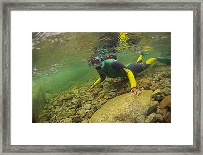 River Snorkelling Framed Print by Alexis Rosenfeld