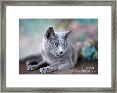 Russian Blue Framed Print by Nailia Schwarz