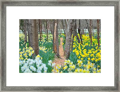 Secret Places Framed Print by Catherine Reusch  Daley