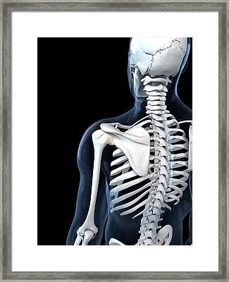 Shoulder Anatomy, Artwork Framed Print by Sciepro
