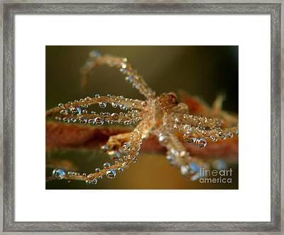 Spider Framed Print by Odon Czintos