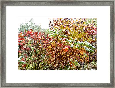 Sumac And Snow Along The Highland Scenic Highway Framed Print by Thomas R Fletcher