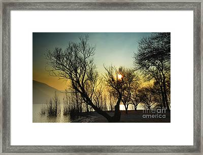 Sunlight Between The Trees Framed Print by Mats Silvan