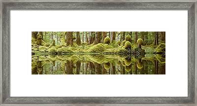 Swamp Framed Print by David Nunuk