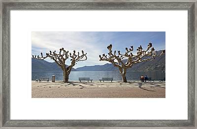 sycamore trees in Ascona - Ticino Framed Print by Joana Kruse
