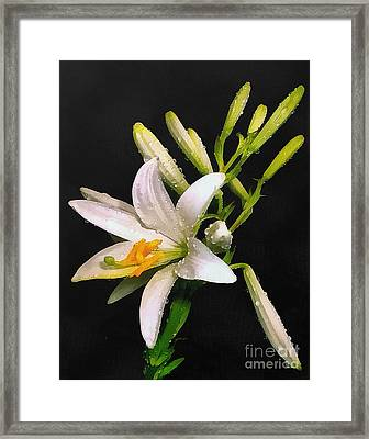 The Lily Framed Print by Odon Czintos