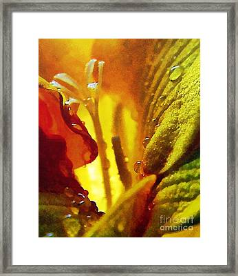 The Pistils Framed Print by Odon Czintos