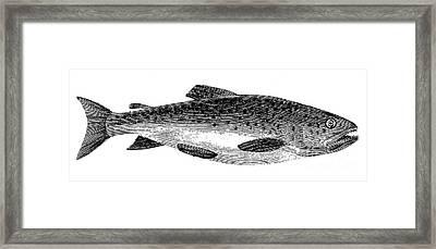Trout Framed Print by Granger