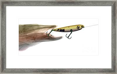 Xray Of Muskie And Lure Framed Print by Ted Kinsman