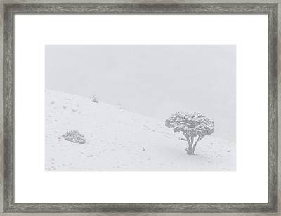 Yellowstone Park Wyoming Winter Snow Framed Print by Mark Duffy