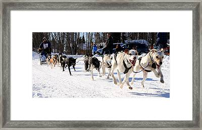 2011 Open North American Sled Dog Race Framed Print by Gary Whitton