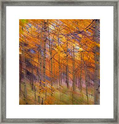 242 Framed Print by Peter Holme III