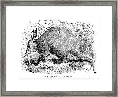 Aardvark Framed Print by Granger
