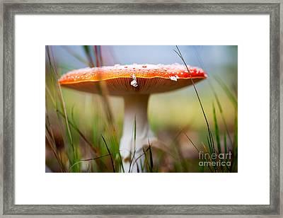 Amanita Framed Print by Kati Molin