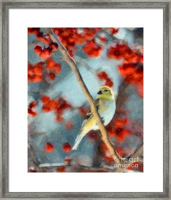 American Goldfinch Framed Print by Betty LaRue