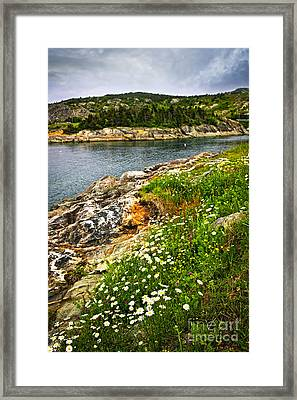 Atlantic Coast In Newfoundland Framed Print by Elena Elisseeva