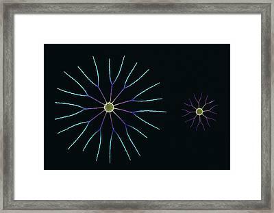 Diatom Algae, Sem Framed Print by Steve Gschmeissner