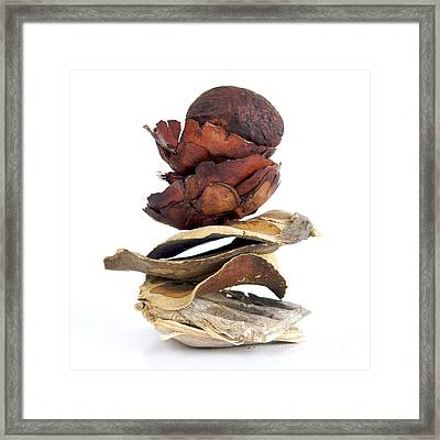 Dried Pieces Of Vegetables.  Framed Print by Bernard Jaubert