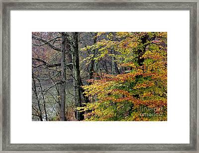 Fall Along West Fork River Framed Print by Thomas R Fletcher