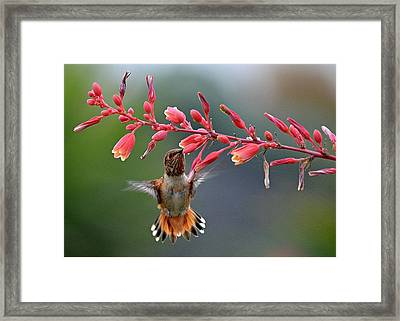 Full Frontal  Framed Print by Fraida Gutovich