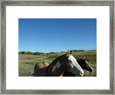 3 Horses In Heaven Framed Print by Brian  Maloney
