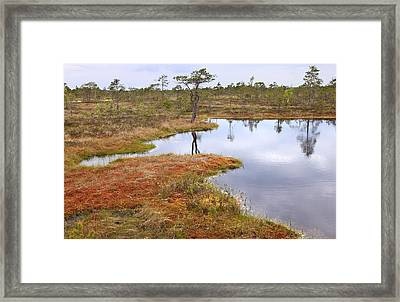 Lake In The Swamp Framed Print by Igors Parhomciks