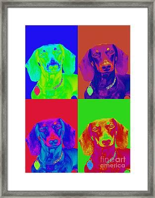 Pop Art Dachshund Framed Print by Renae Laughner