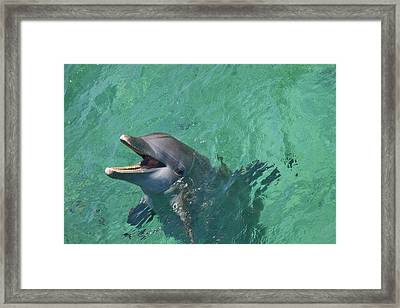 Roatan, Bay Islands, Honduras Framed Print by Stuart Westmorland